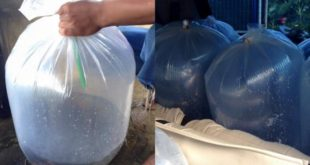 Manfaat Pemberian Oksigen Pada Packing Benih Lele