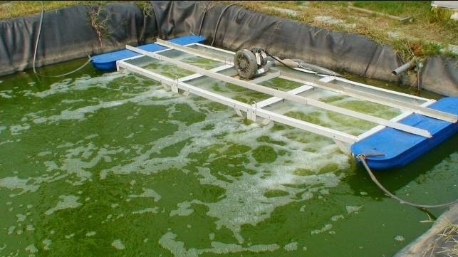 Aerator Kolam Terpal Yang Baik Untuk Budidaya Ikan