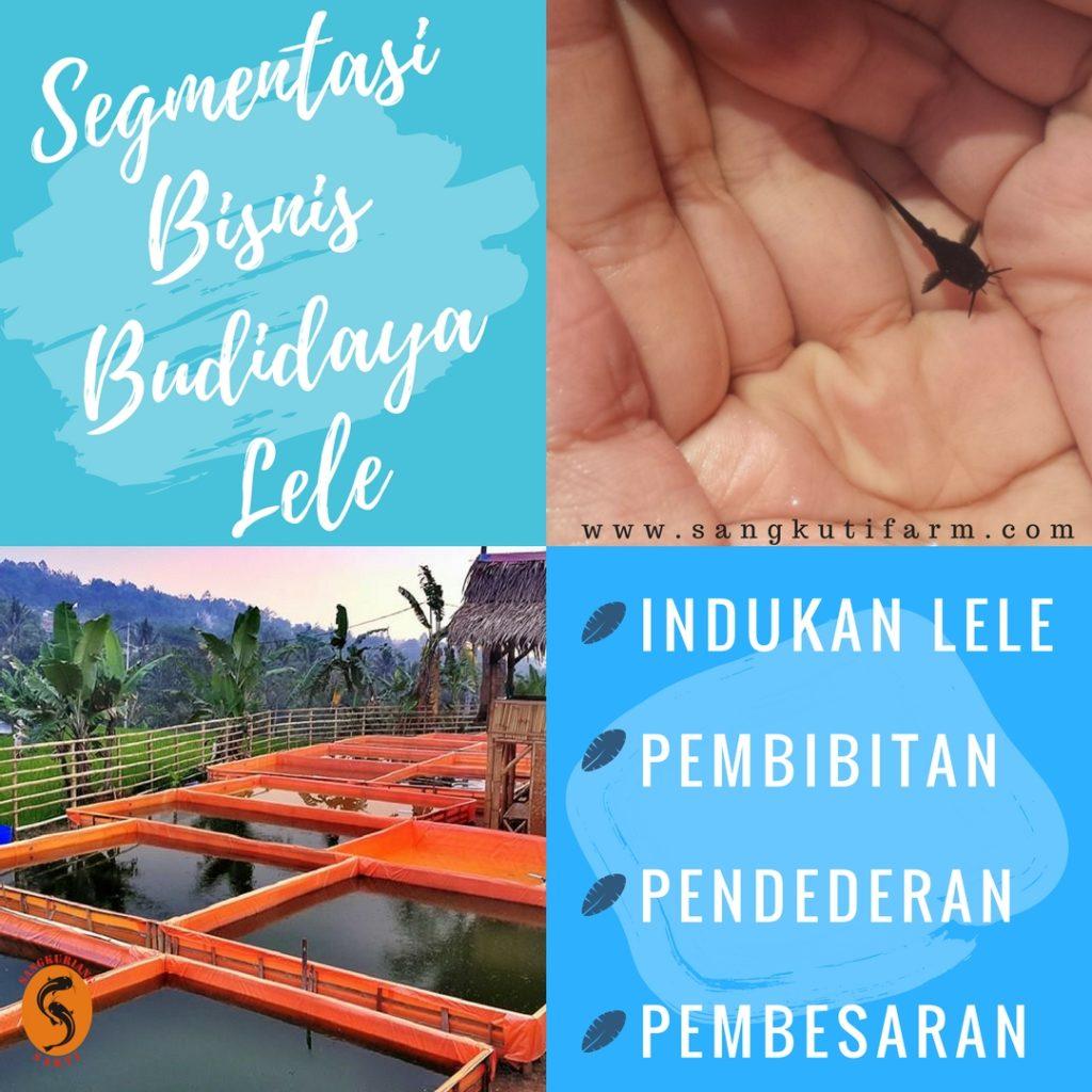 Bisnis Budidaya Lele