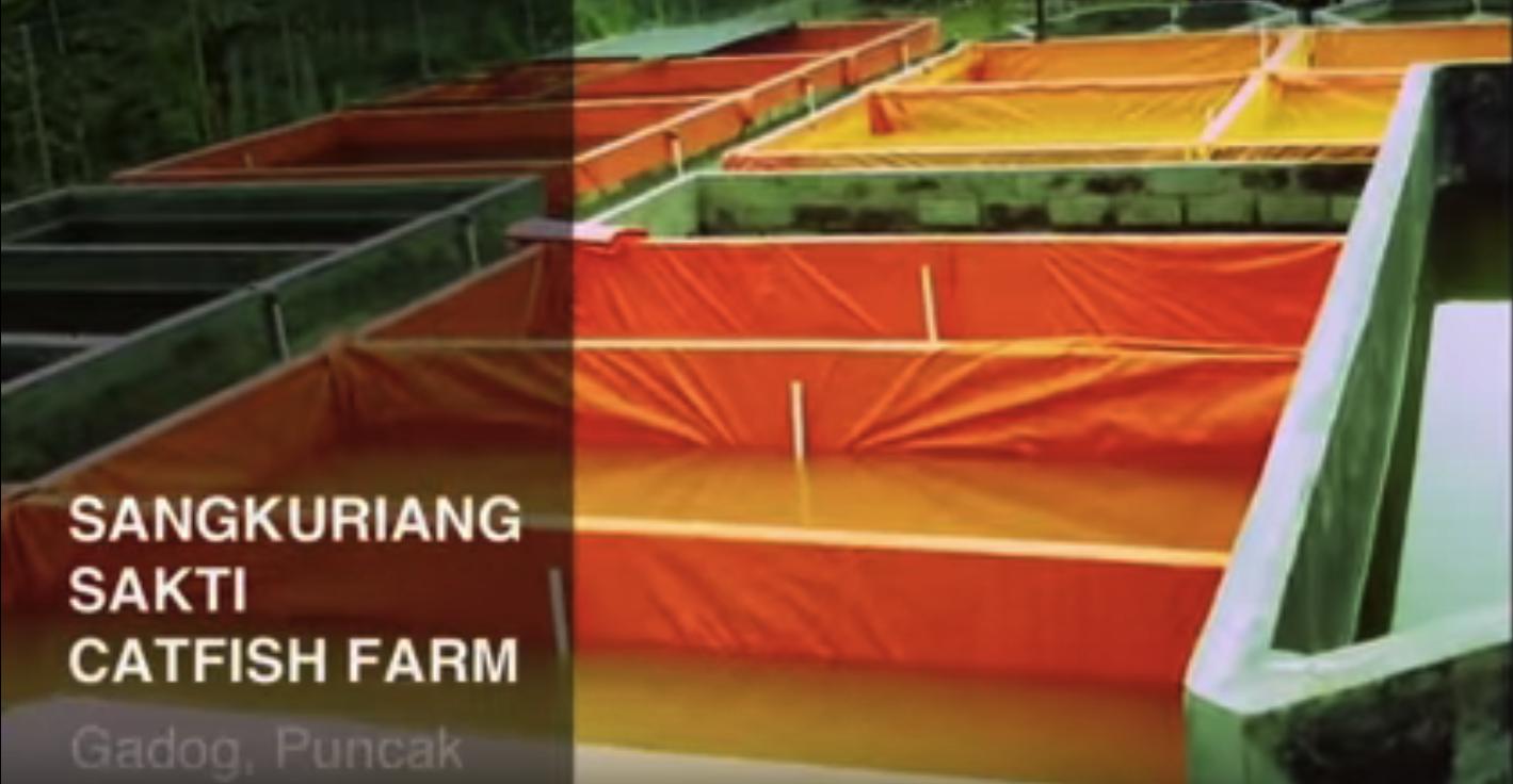 video profil sangkuti farm