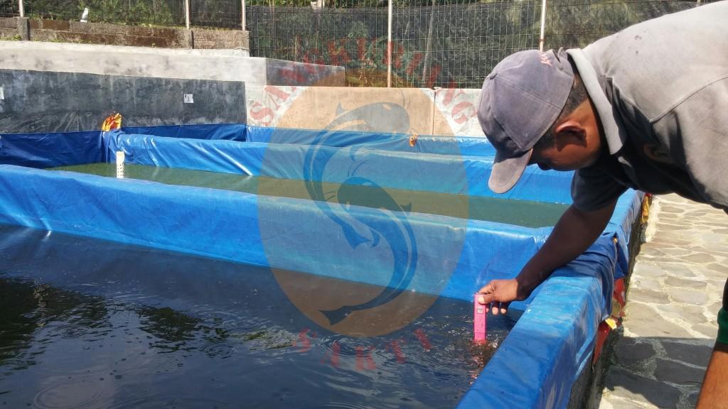 ph air untuk kolam lele yang baik