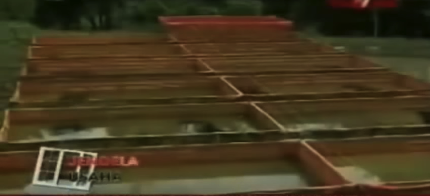 VIDEO KISAH SUKSES BUDIDAYA LELE SANGKURANGA 30 HARI PANEN