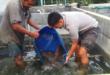Cara Pemijahan Ikan Lele Yang Baik dan benar