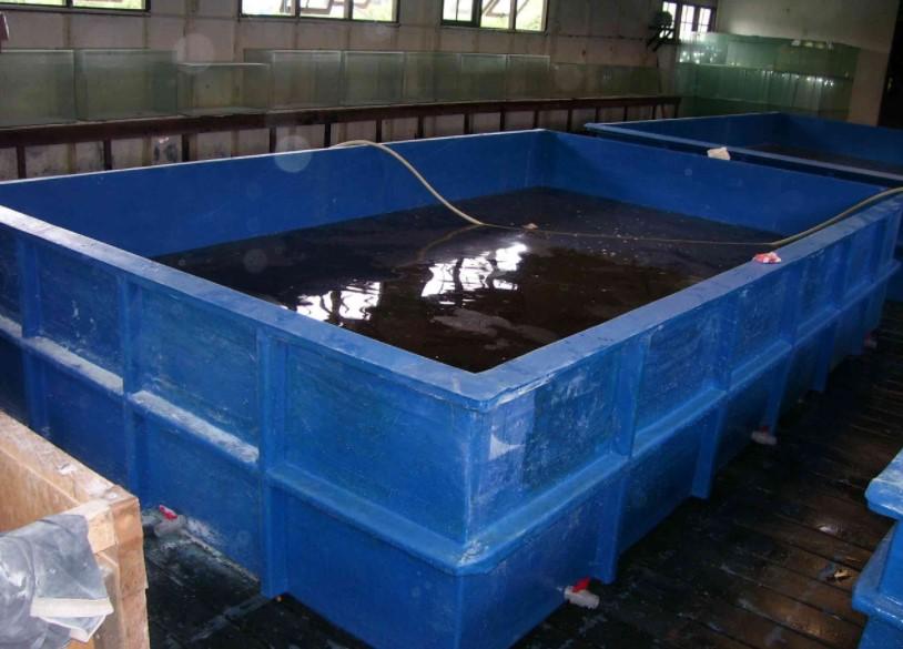 Jenis - Jenis Kolam Untuk Budidaya Lele