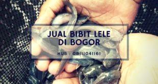 Jual Bibit Lele Berkualitas di Bogor