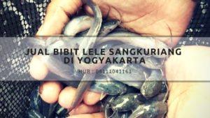 Jual bibit lele sangkuriang di Yogyakarta