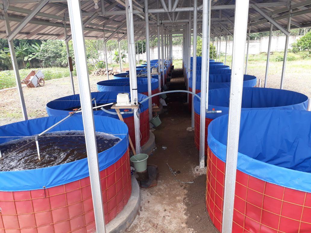 kolam terpal bulat bioflok