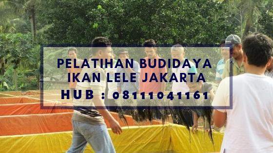 Pelatihan Budidaya Ikan Lele Jakarta