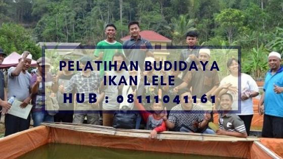 Pelatihan Budidaya Ikan Lele