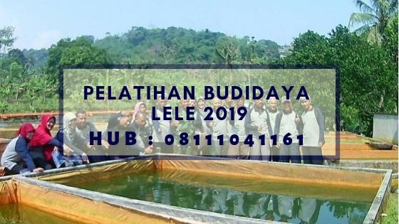 Pelatihan Budidaya Lele 2019