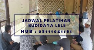 Jadwal Pelatihan Budidaya Lele