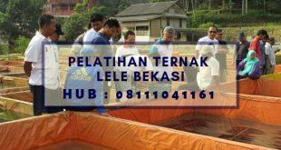 Pelatihan Ternak Lele di Bekasi
