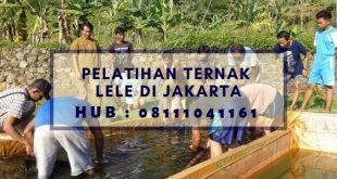 Pelatihan Ternak Lele di Jakarta