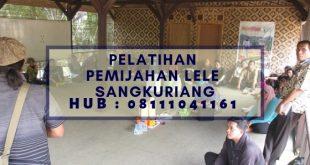 Pelatihan Pemijahan Lele Sangkuriang