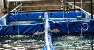 sirkulasi air kolam lele