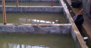 kolam ikan lele permanen