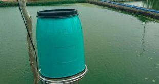 perawatan air kolam lele