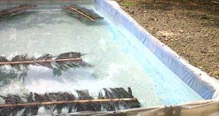 kolam plastik ikan lele