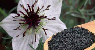 Jenis Herbal Untuk Lele