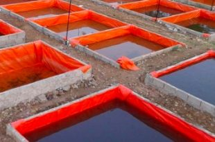cara pendederan lele di kolam