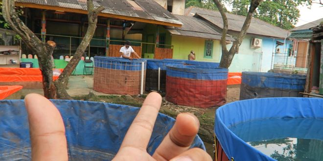 Jual Bibit Lele di Cibubur |PESANTREN MAJELIS ILMU RAHMATAN LIL 'ALAMIN