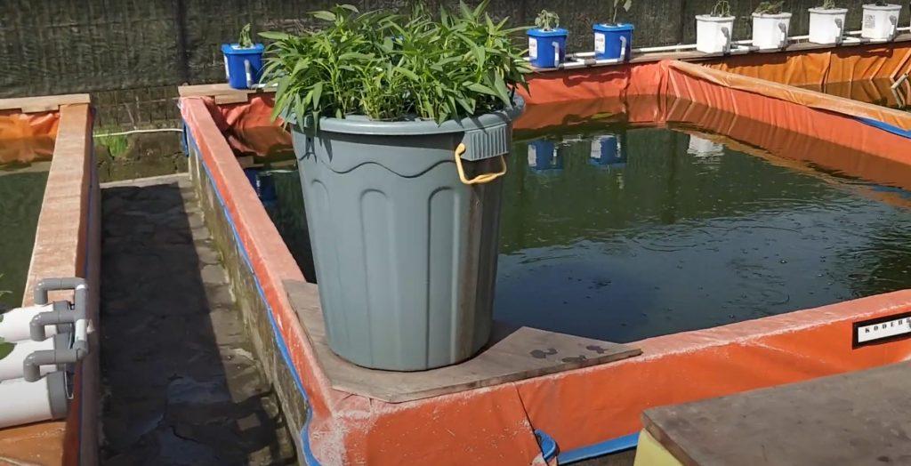 Cara Mempercepat Pertumbuhan Lele di Kolam Terpal